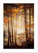 Sunlight in the Autumn woods