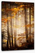 Sunlight in the Autumn woods Stretched Canvas 47162125