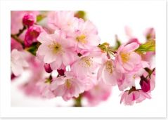 Flowers Art Print 48086885