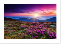 On top of the world Art Print 49545683