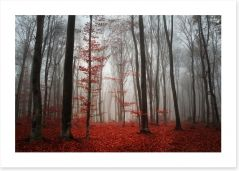 Autumn fog in the forest Art Print 50430017