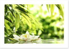 Water lily adrift