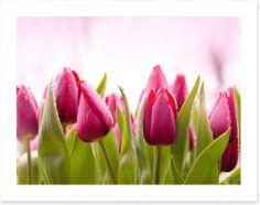 Flowers Art Print 51930622
