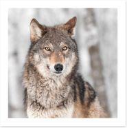 Grey wolf Art Print 52405094