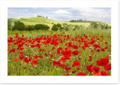 Tuscany poppies Art Print 52672130
