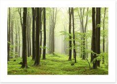Spring beech forest Art Print 52893214