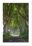 Magical wood tree tunnel