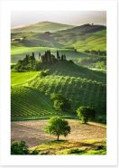 Tuscan olive groves and vineyards Art Print 53355853