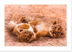 Playful lion cubs