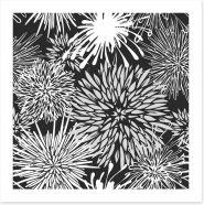Chrysanthemum burst