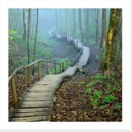 The forest stairway