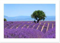 Provence 57100874