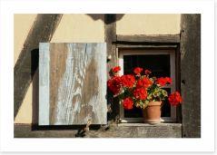 Geranium outside the window