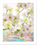 Japanese orchid reflections
