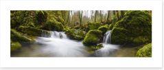 Green moss stream