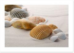 Shells on the sand Art Print 61327381