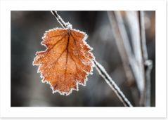 The last Autmn leaf Art Print 61950170
