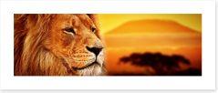 The lion at Mount Kilimanjaro sunset Art Print 62334577