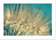 Dandelion flowers Art Print 63240565
