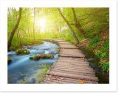 Boardwalk through the forest Art Print 63778873