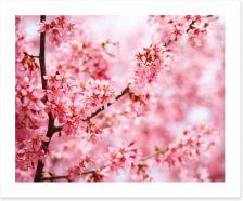 Cherry blossom Sakura Art Print 63794616
