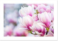 Delicate magnolia
