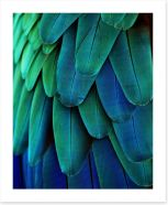 Macaw feathers Art Print 64649675