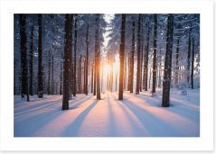 Snowy forest sunrise