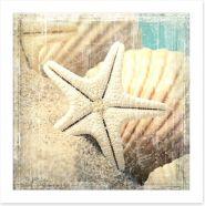 Shells and starfish Art Print 65708712