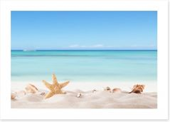 Summer beach with shells