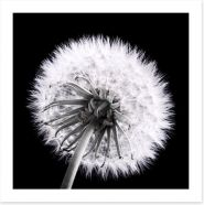 Black and White Art Print 66806872