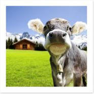 The dairy milk cow Art Print 67376520