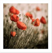 Dreaming of red poppies Art Print 67999956