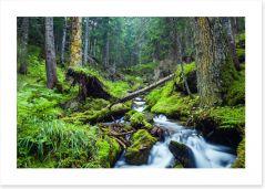 Vibrant forest stream Art Print 69280059