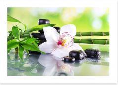 Zen Art Print 71100540