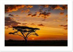 Savanna sunset silhouettes