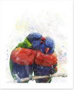 Rainbow lorikeet love