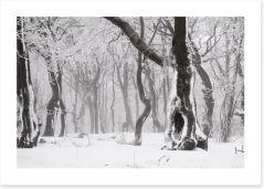Glacé forest Art Print 78577026