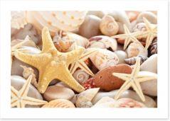 Seashells Art Print 79494422