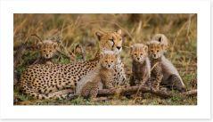 Cheetah cub club Art Print 79653055