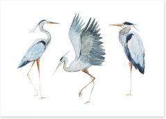 Birds Art Print 87462261