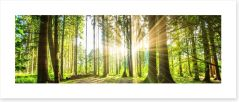 Sunbeam forest panorama