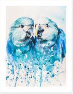 Little blue macaw