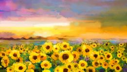 The sunflower meadow