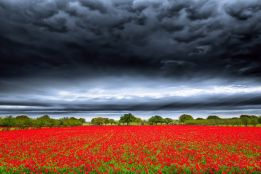 Storm over the poppies