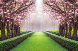 Between the blossom