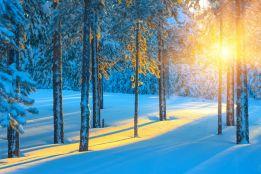 Sunbeam in the snow