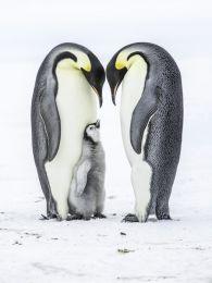 Parental love