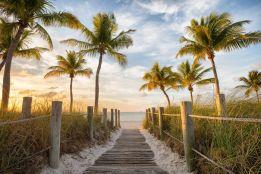 Palms to the beach