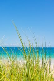 Past the beach grass